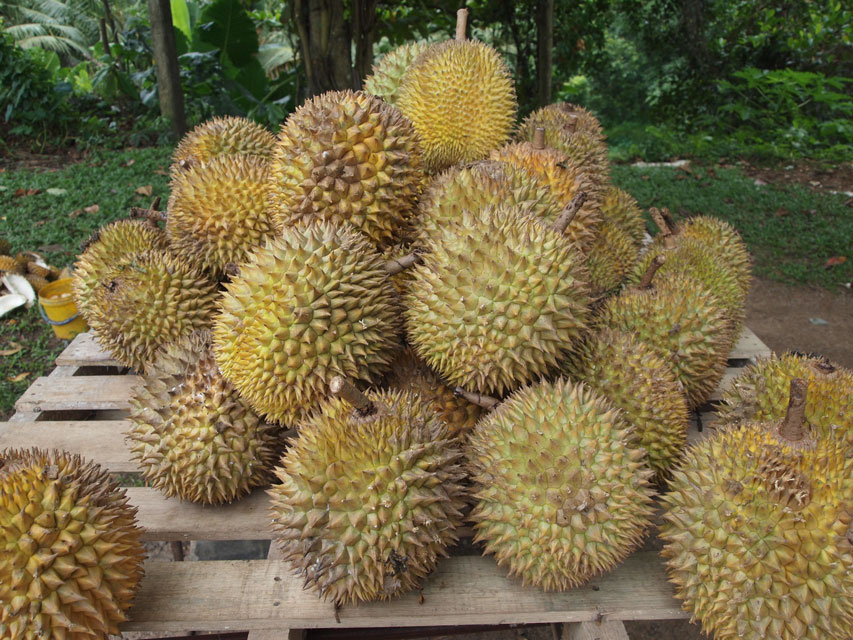 source: Durian